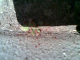 20130517赤虫