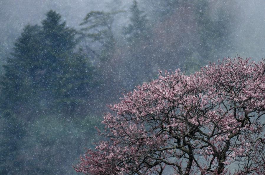 桜2 186-2s