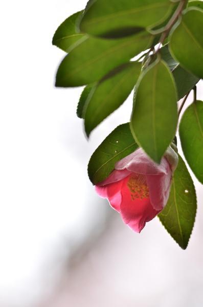 桜2013 263-2s