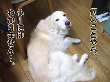 2012_03180005.jpg