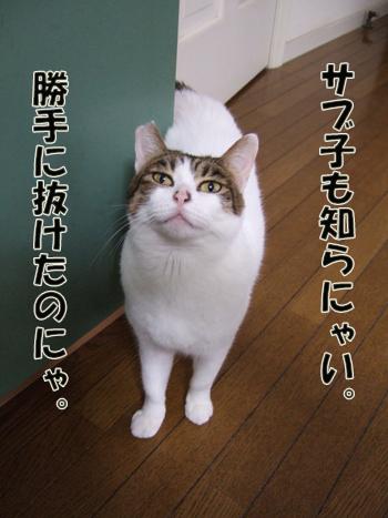 2012_03180014.jpg