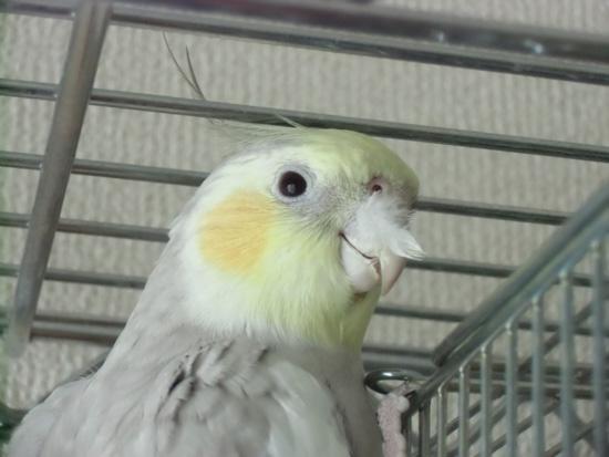 鼻に羽毛が