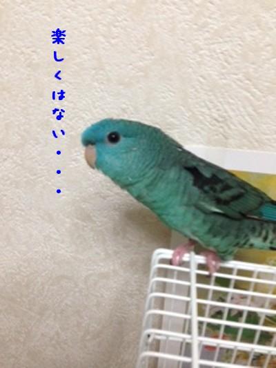 写真4_~1