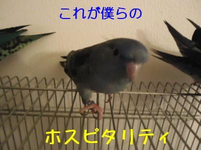 画像 832