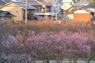 南公園 葵梅園