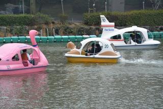 上池のペダルボート