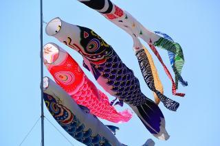 第40回岡崎こどもまつり 鯉のぼり
