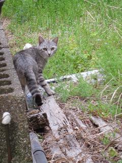 猫 (=^・^=)