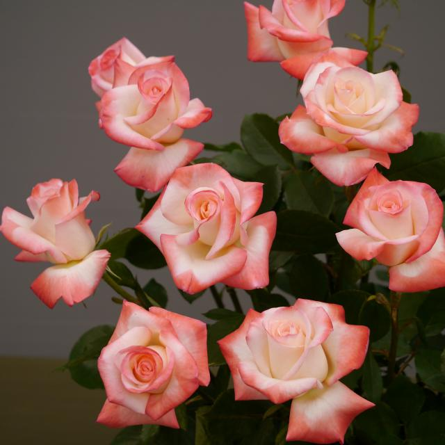 2012_0513_130913-P1040043_convert_20120514145732.jpg