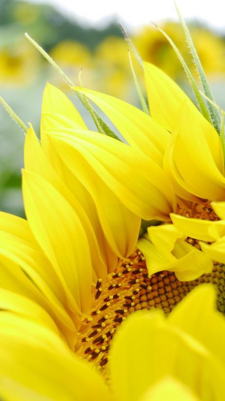 2012_0813_095644-_1100258_convert_20120815131129.jpg