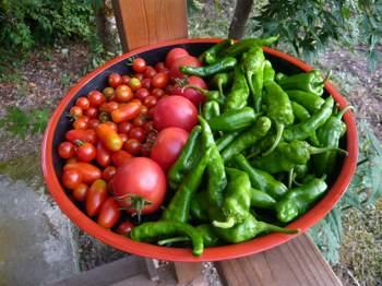 野菜240823