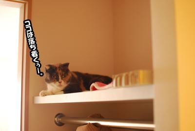 猫の午後。