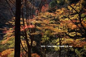 EOS6D_2014_11_16_9019.jpg