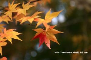 EOS6D_2014_11_16_9073.jpg