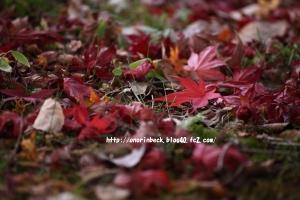 EOS6D_2014_11_16_9121.jpg