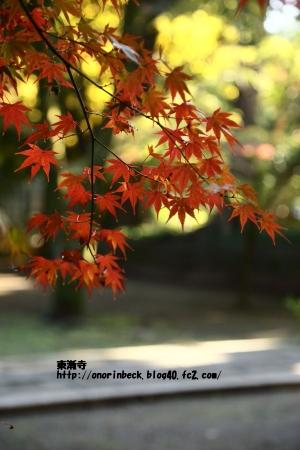 EOS6D_2014_11_22_9272.jpg