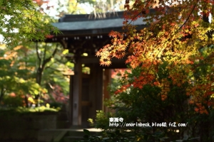 EOS6D_2014_11_22_9325.jpg
