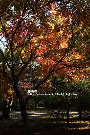 EOS6D_2014_11_22_9331.jpg