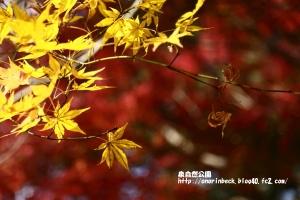 EOS6D_2014_11_23_9443.jpg