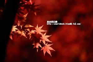 EOS6D_2014_11_23_9576.jpg