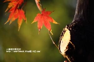 EOS6D_2014_11_29_9999_118.jpg