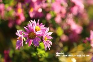 EOS6D_2014_11_29_9999_52.jpg