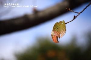EOS6D_2014_11_30_9999_59.jpg