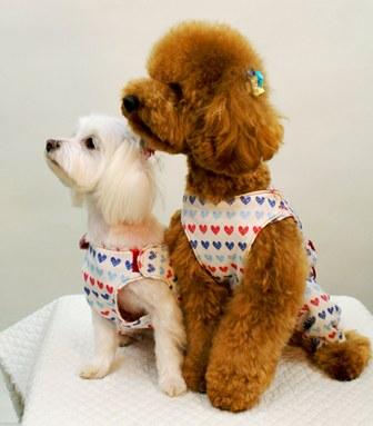 マルチーズ犬服