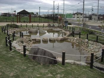 新ビオトープ池