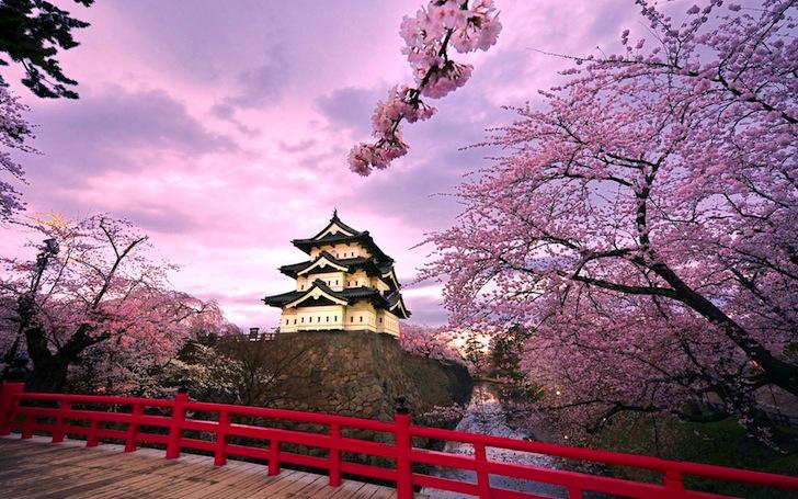 青森県弘前市・弘前城と桜