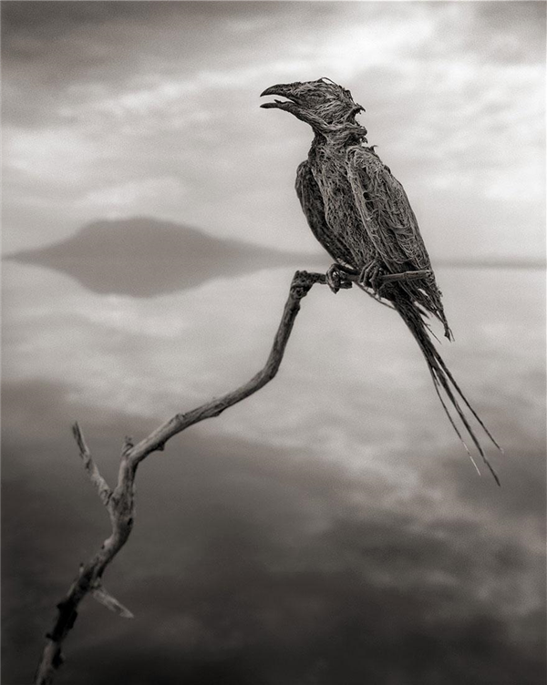 lake-natron-calcium-salt-petrified-animals-nick-brandt-4.jpg