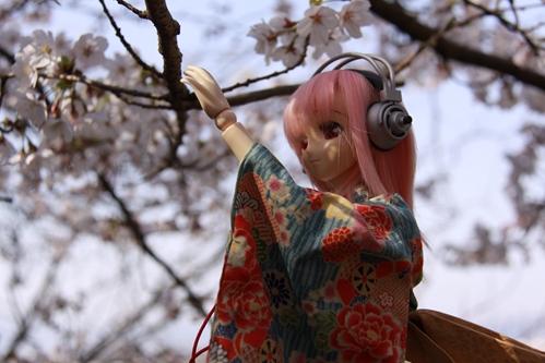桜とそに子その4
