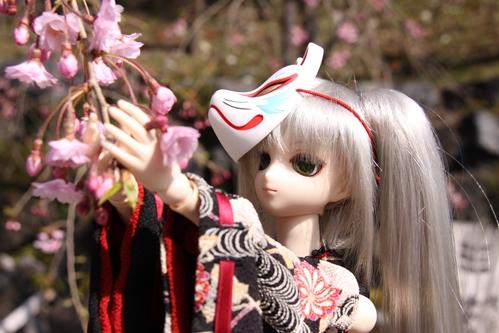 桜とカンナその1 右
