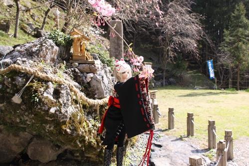 桜とカンナその3 遠景