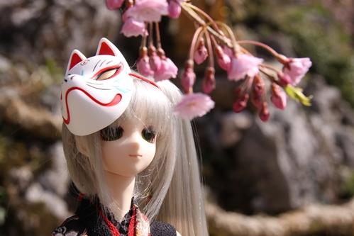 桜とカンナその5