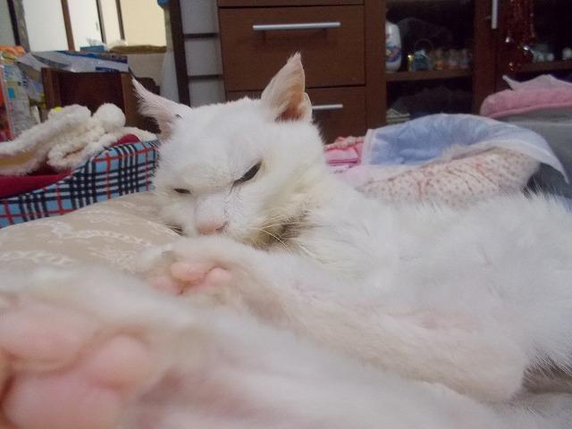寒か時は、 寝るとです