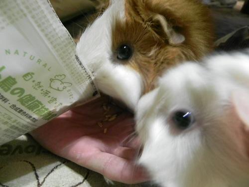 すみれ&葵