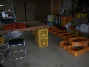 朝一の収穫
