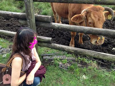 えっと。。。。。ジャージー牛?