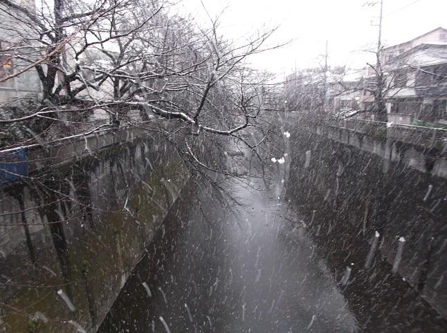 石神井川499