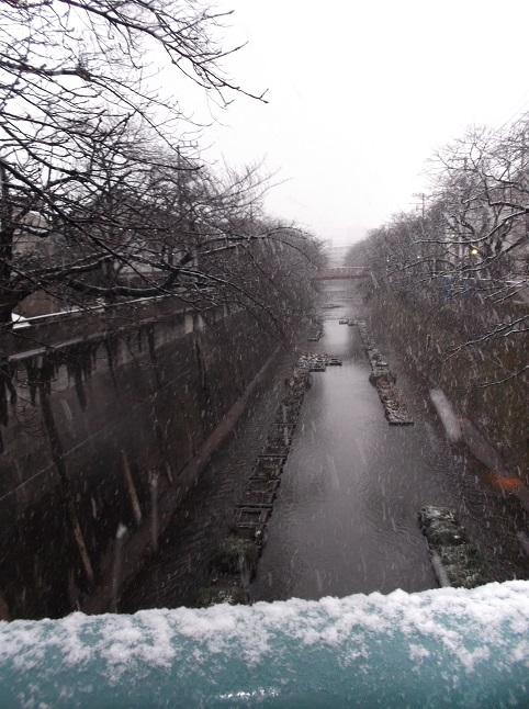 石神井川492