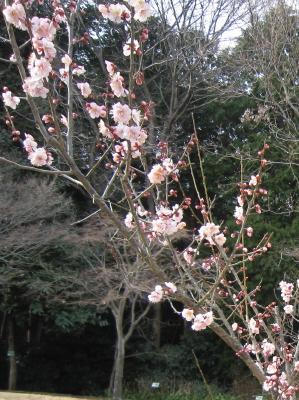 春は そこまで来ています