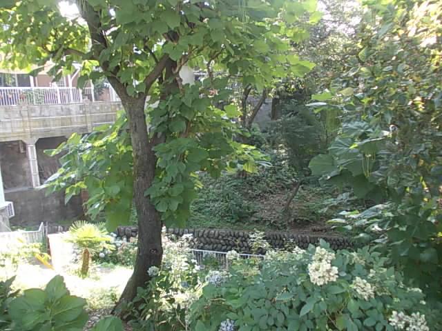 DSCN4533.jpg