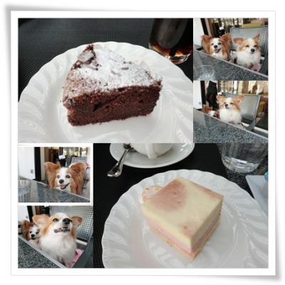 catsガトーショコラとチーズケーキ