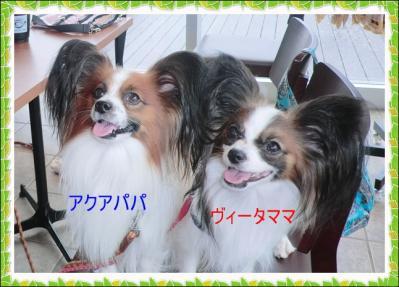 CIMG2065_20130423233522.jpg