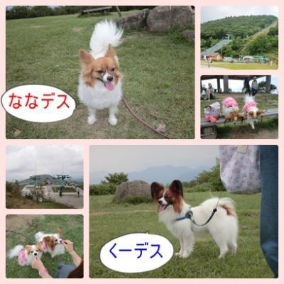 cats_20110820142225.jpg