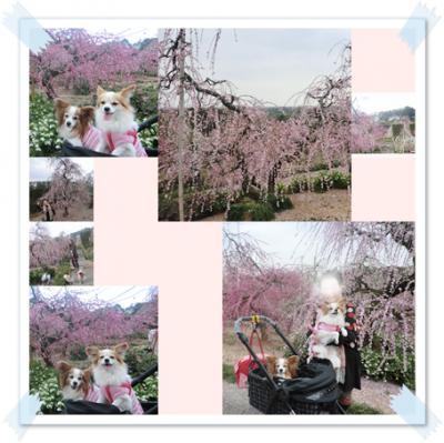 cats_20130314224025.jpg