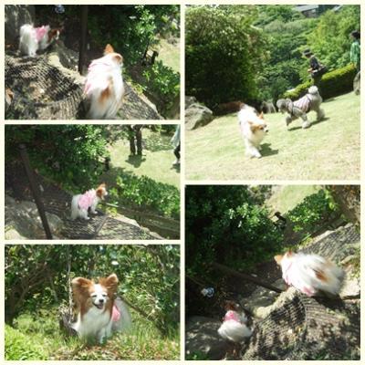cats_20130523223902.jpg