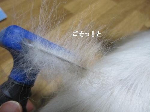 032-2_20120823194040.jpg