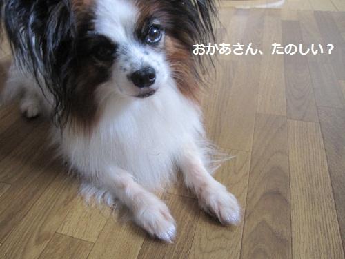 041-2_20120904113008.jpg